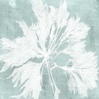 Seaweed on Aqua VI Fine-Art Print