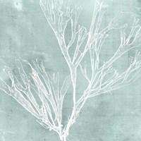 Seaweed on Aqua VII Fine-Art Print