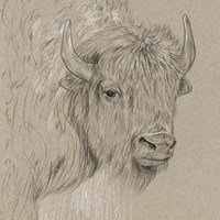Bison Sketch I Fine-Art Print