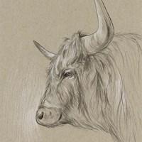 Bison Sketch II Fine-Art Print