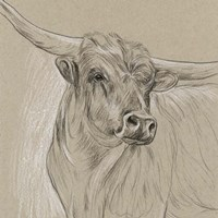 Longhorn Sketch I Fine-Art Print