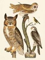 Wilson Owls I Fine-Art Print
