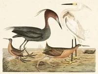 Heron Family IV Fine-Art Print