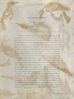 Ornithology Impressions I Fine-Art Print