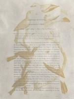 Ornithology Impressions II Fine-Art Print