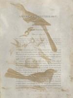 Ornithology Impressions III Fine-Art Print