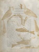 Ornithology Impressions IV Fine-Art Print