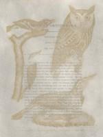 Ornithology Impressions VI Fine-Art Print