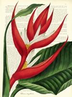 Vintage Botany I Fine-Art Print