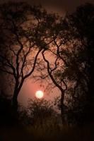 Okavango Delta, Botswana Sunset Behind Tall Trees Fine-Art Print