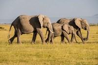 Africa, Kenya, Amboseli National Park, Elephant Fine-Art Print