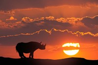 Kenya, Masai Mara Composite Of White Rhino Silhouette And Sunset Fine-Art Print