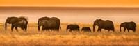 Etosha National Park, Namibia, Elephants Walk In A Line At Sunset Fine-Art Print