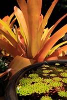 A Potted Plant, Cairns Botanic Gardens, Queensland, Australia Fine-Art Print