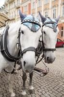 Czech Republic Horses On Cobblestone Karlovy Vary Street Fine-Art Print