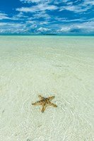 Sea Star In The Sand On The Rock Islands, Palau Fine-Art Print