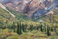 Alaska, Fall Foliage, Sheep Mountain Fine-Art Print