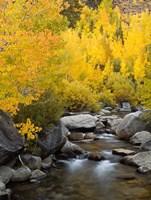 California, Eastern Sierra Bishop Creek During Autumn Fine-Art Print