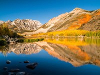 California, Eastern Sierra, Fall Color Reflected In North Lake Fine-Art Print