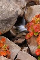 Small Waterfall In The Sierra Nevada Mountains Fine-Art Print