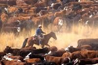 Cowboy Cattle Drive Fine-Art Print