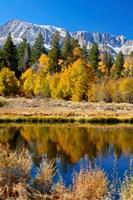 Yosemite's Mount Dana Fine-Art Print