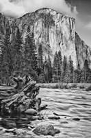California, Yosemite, El Capitan (BW) Fine-Art Print