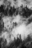 Swirling Forest Mist, Yosemite NP (BW) Fine-Art Print