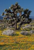 Mojave Desert Joshua Tree Fine-Art Print