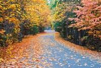 Autumn Along  Mirror Lake Road Fine-Art Print