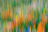 Wildflower Abstraction, Angeles National Forest Fine-Art Print