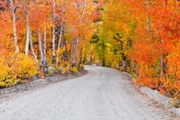 Autumn In The Inyo National Forest Fine-Art Print