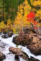 Autumn Along Bishop Creek Fine-Art Print