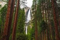 Yosemite Falls Through A Forest Fine-Art Print