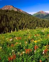 Wildflowers In Meadow Of The Maroon Bells-Snowmass Wilderness Fine-Art Print