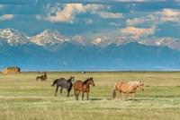 Heard Of Horses In Hayfield, San Luis Valley Fine-Art Print