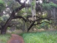 Trail Beneath Moss Covered Oak Trees, Florida Florida Fine-Art Print