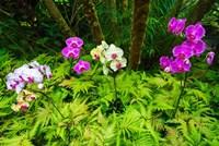 Orchids At The Hawaii Tropical Botanical Garden Fine-Art Print