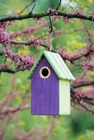 Bird House In Eastern Redbud, Marion, IL Fine-Art Print