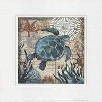 Monterey Bay Turtle Fine-Art Print