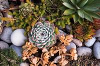 Cape Ann Succulents Fine-Art Print