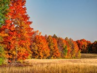 Fall Colors Of The Hiawatha National Forest Fine-Art Print