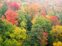 Forest Above The Cut River Bridge, Michigan Fine-Art Print
