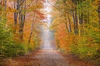 Autumn Road In Schoolcraft County, Michigan Fine-Art Print