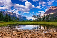 Driftwood And Pond, Saint Mary Lake, Glacier National Park, Montana Fine-Art Print