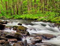 Water Flows At Straight Fork, North Carolina Fine-Art Print