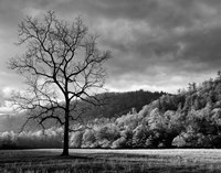Storm Clearing At Dawn In Cataloochee Valley, North Carolina (BW) Fine-Art Print