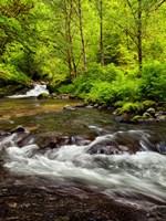 Siuslaw National Forest, Sweet Creek, Oregon Fine-Art Print
