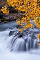 Rogue River Waterfalls In Autumn, Oregon Fine-Art Print