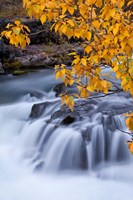 Rogue River Waterfalls In Autumn, Oregon Fine-Art Print